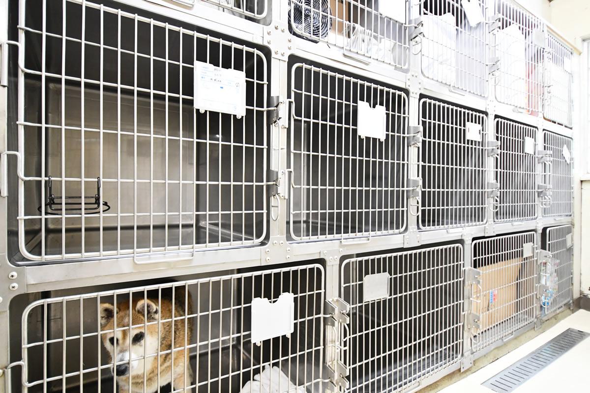犬の入院室